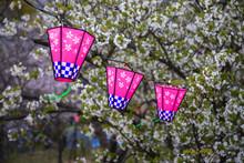 桜とランタン 春の花見イメージ