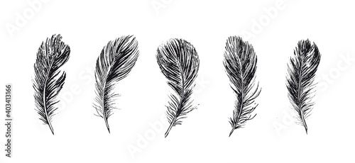 Feathers, Hand drawn style sketch illustrations. Wallpaper Mural