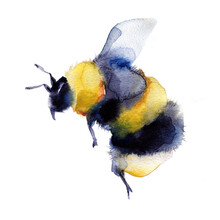 Watercolor Bumblebee In Flight Hand Painted Illustration Isolated On White Background. Summer Symbol For Holiday, Postcard, Poster, Banner, Children's Illustration And Website.