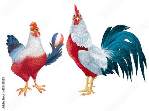 poulet, coq, de france, français, oiseau, oeuf, drapeau, fière, production, anim Fototapet