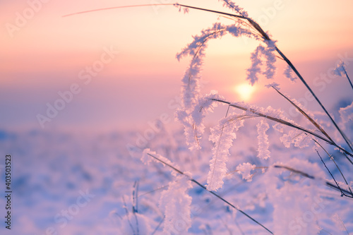 Frosted plants on the forest meadow at sunset. Macro image, shallow depth of field. Beautiful winter nature background