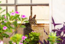Gato Sentado De Frente Pra Uma Janela E Com Flores Ao Redor. Gato Abandonado. Gato De Rua.