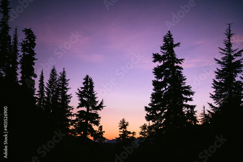 Silhouetted Trees In The Backcountry at Sunset With Purple Sky