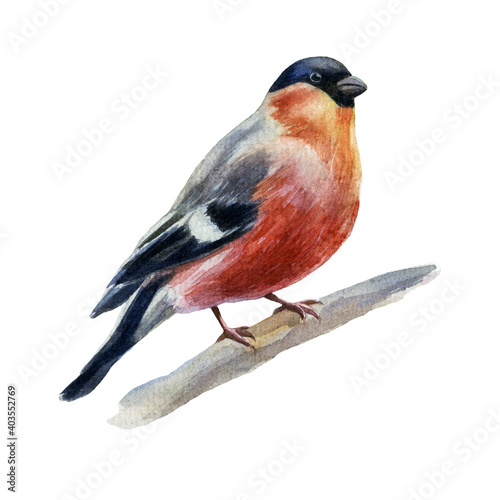 Canvas Print Watercolor illustration of a bullfinch sitting on a branch.