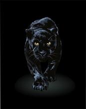 Black Panther Walking Toward In Shadow Illustration