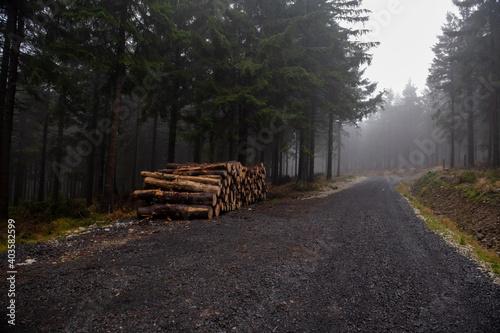 Obraz stos belek ze ściętych drzew. Sosny ułożone i gotowe do wywiezienia do tartaku - fototapety do salonu
