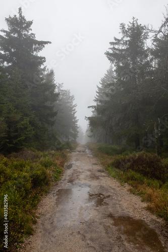 Obraz leśną ścieżka po jesiennej burzy. Błoto i liczne kałuże utrudniają spacerowanie - fototapety do salonu
