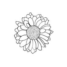 Vector Illustration Of Rudbeckia Flower
