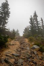Leśna ścieżka Jesienią Jest Dość Niebezpieczna. Wilgotne Kamienie Są Bardzo śliskie