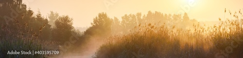 Country field in a fog at sunrise. Tree silhouettes in the background. Pure soft golden morning sunlight. Atmospheric landscape. Idyllic rural scene. Concept art, fairy tale, magic. Panoramic view