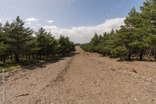Canvas Print firebreak in Sierra Nevada in southern Spain