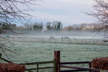 Horses Grazing In Foggy And Frosted Meadow