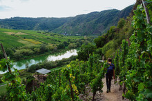 Hiking Along The Mosel And Through The Vineyards
