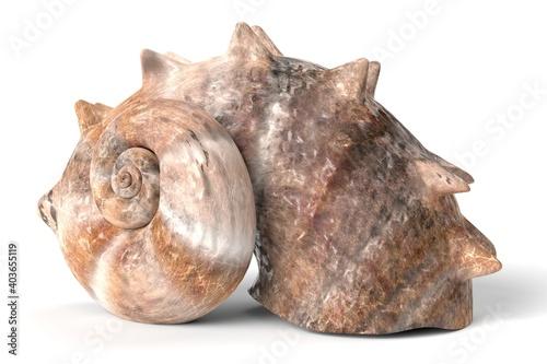 Fotografiet 3D Illustration of a Seashell