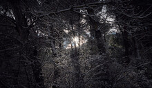 Photograph Of The Sun Breaking Through The Snowy Trees On A Winter Day In The Forest.