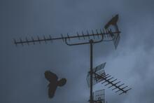 Birds Flying And Landing On TV Antennas