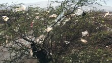 Nature And Environment Pollution, Aerial 4K. Green Tree Covered By The Plastic Bags From The Landfill On The Green Tropical Island. Lots Of Plastic Bags Debris On Plant Branches. Ecology Problem.
