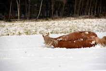 Pferdewelt. Wunderschöne Pferde Im Winter