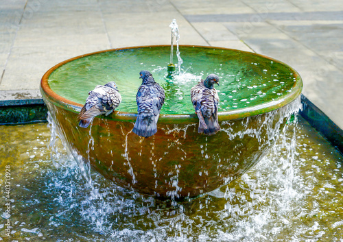 Obraz na plátne Australia, Sydney, fountain with pigeons
