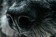 Dog Nose Macro Extreme Close Up