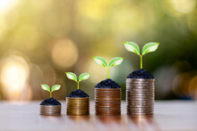 Coin And Plant On Coin Pile Ideas For Saving Money And Investing Business.