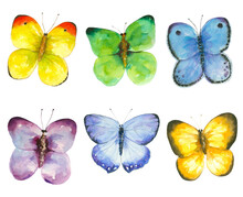 Butterflies Set Of 6