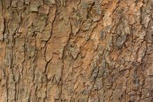 Aged Tree Bark Background Texture