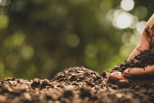 The Man's Hands Were Pouring Fertile Soil Suitable For Planting Trees.