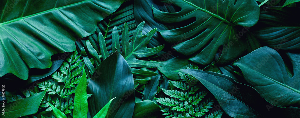 closeup tropical green leaf background. Flat lay, fresh wallpaper banner concept