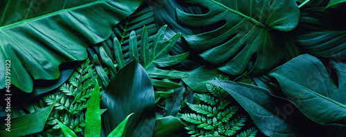 Fototapety, obrazy: closeup tropical green leaf background. Flat lay, fresh wallpaper banner concept