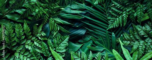 Cuadros en Lienzo closeup tropical green leaf background