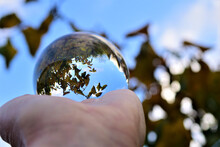 Selective Focus Shot Of A Hand Holding A Crystal Ball With An Autumn Tree Reflection