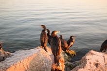 Pelican On The Rocks
