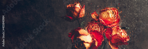 Dried orange roses. Bunch of beautiful faded flowers through the glass with rain drops. Sad love concept. Copy space, grey background, banner size