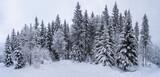 Schwarzwald bei Hinterzarten im Winter