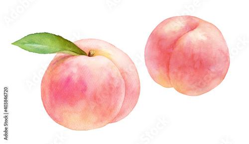 Obraz 熟したジューシーな桃の果実2種。水彩イラストのトレースベクタター。白桃。 - fototapety do salonu