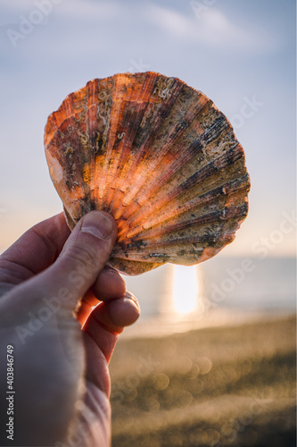 Sea shell being held at sunset on the beach Fototapeta