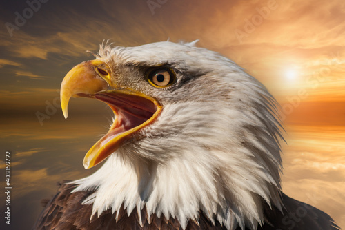 Canvas Print Bald eagle with open beak