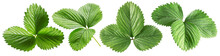 Collection Of Strawberry Leaves Isolated On A White Background