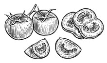 Tomato And Slice. Vegetables Sketch Vector
