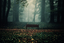 Bench At Forest