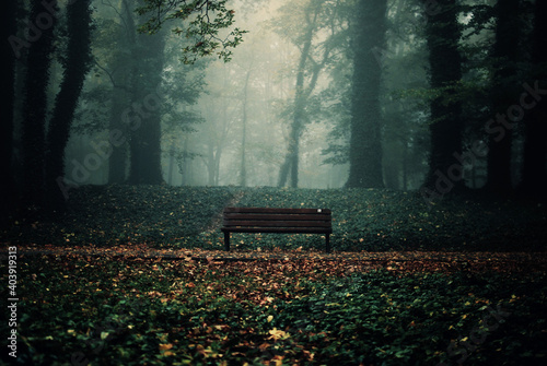 Fototapeta Bench At Forest