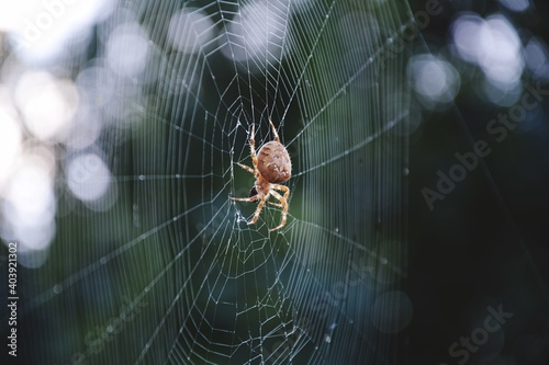 Close-up Of Spider On Web Fototapete