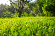 Fresh Green Grass And Water Drops Over It Sparkling In Sunlight.