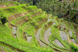 canvas print picture - Scenic view of the lush green Tegallalang rice terraces in Ubud, Bali, Indonesia.