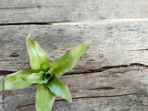 Fototapeta fresh herbs on wooden background obraz na płótnie