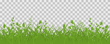 Green Grass Meadow Border. Spring Plant Field Lawn. Grass Background.