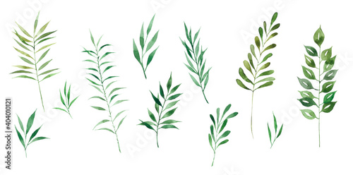 Fototapety, obrazy: Large watercolor set of green herbs. Ideal for decoration