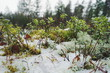 Leinwandbild Motiv Close-up Of Plants Against Trees During Winter