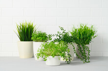 Collection Of Various Houseplants In Pots. Potted Plants On Gray Table Against White Brick Wall. Home Gardening Concept. Copy Space
